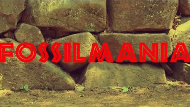 annie the clumsy whale talx fossilmania02